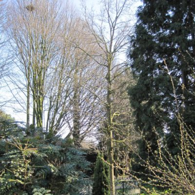 Kennemerstraatweg 134 Wilheminaboom